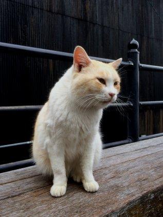 boots_cat.jpg