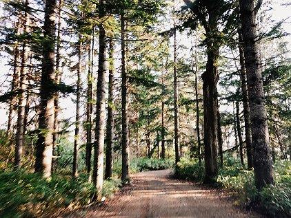camp_road.jpg