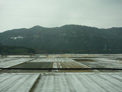 rittou_maibara.jpg