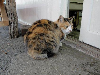 yoro_cat.jpg