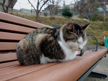 glover_cat.jpg