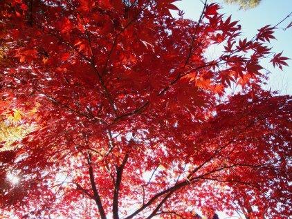 park_momiji2.jpg