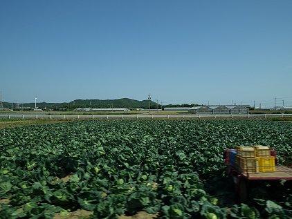 r259_kameyama.JPG